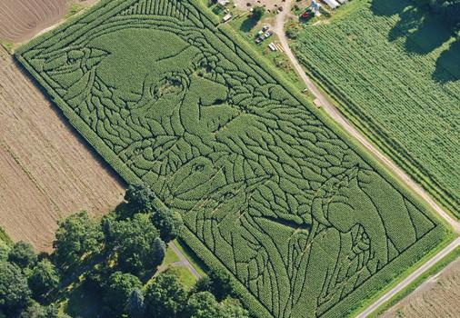 2009 Maze - Charlies Darwin