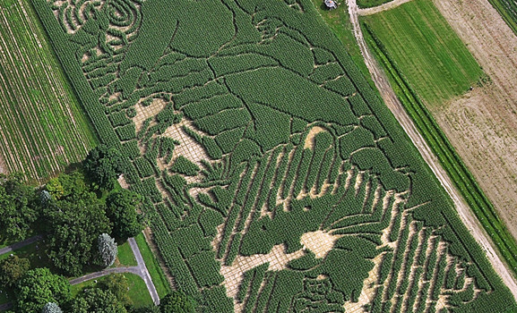 Mike's Maze 2012 - The Sower's Banquet