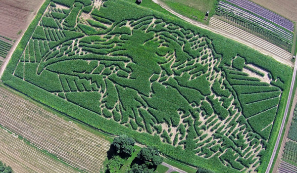 Mike's Maze 2014 - Animal Intelligence